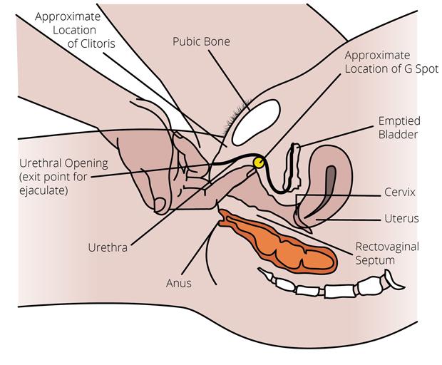 g punkt orgasme strapon